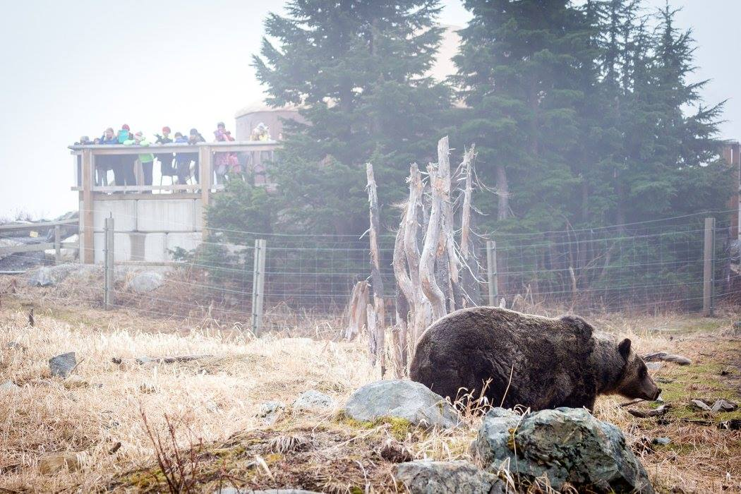 Image: Grouse Mountain