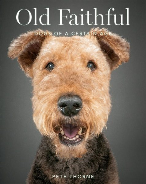 Stanley the terrier (Old Faithful Photo Project).