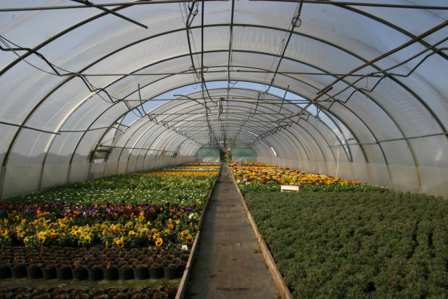 Go inside the greenhouses on Veggie Day (<a href=