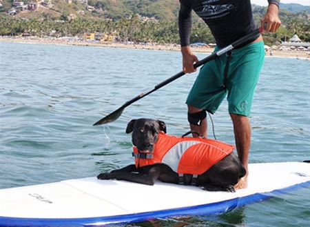 RC Pets canine lifejacket (RC Pets).