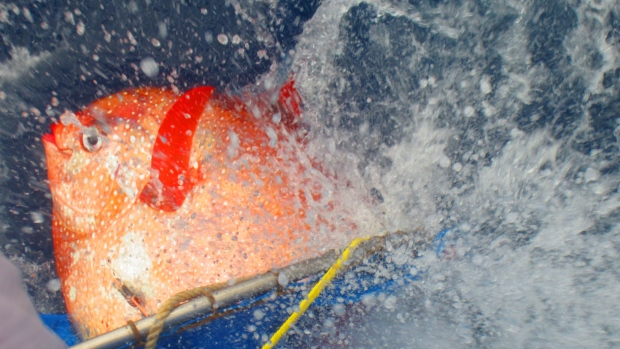 Image: NOAA Fisheries/Southwest Fisheries Science Center