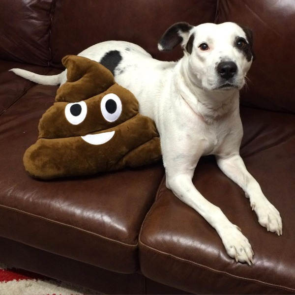Faith, loving life with her new poop emoji stuffie.