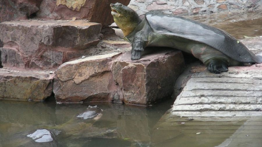 Image: Gerald Kuchling/ Turtle Survival Alliance