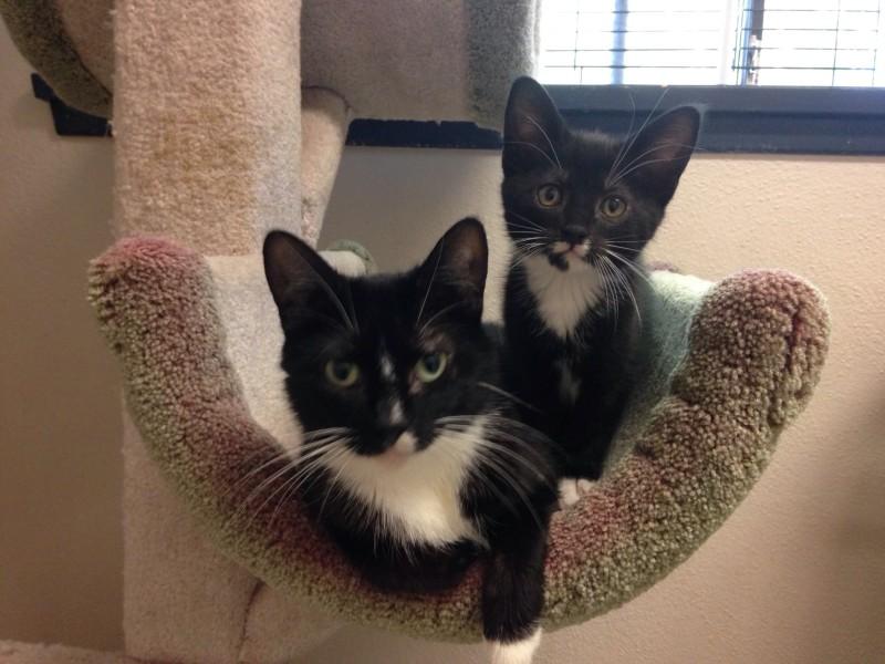 Gary and his mama (SPCA)
