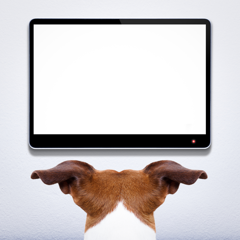 Dog watching TV/Shutterstock