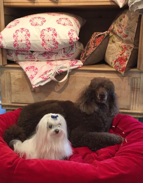 Image: Kona and Lulu - Rothman & Co.