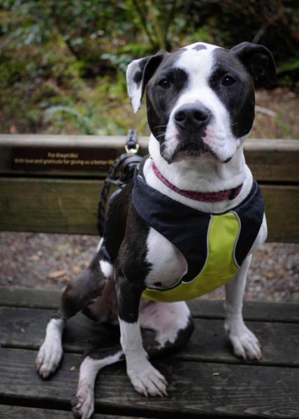 Paisley (courtesy Vancouver Animal Control)