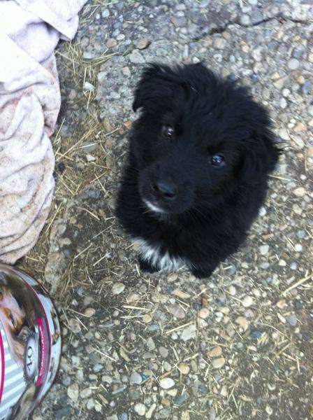 Ryder as a wee pup.