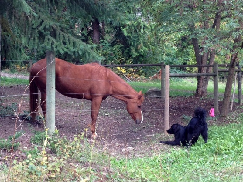 Ryder playing with a horse friend.