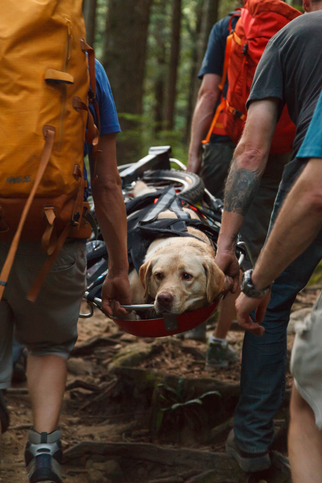 Image: North Shore Rescue / Facebook