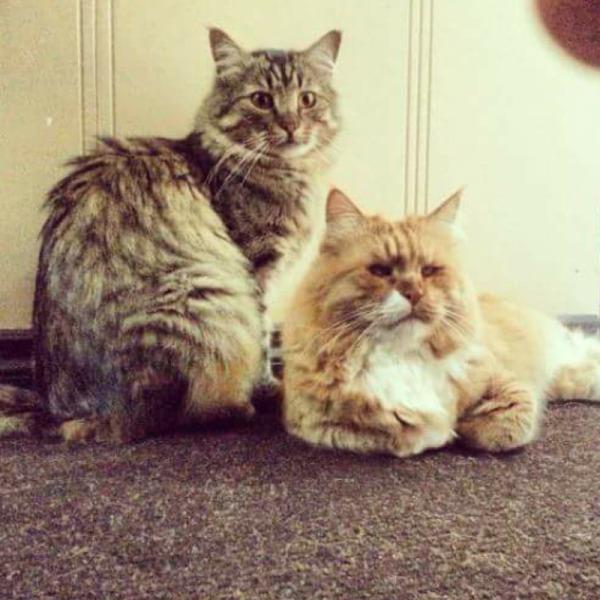 Massih and his kitty sibling.