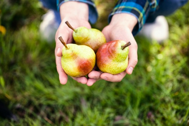 Image: Organic Fruit via Shutterstock
