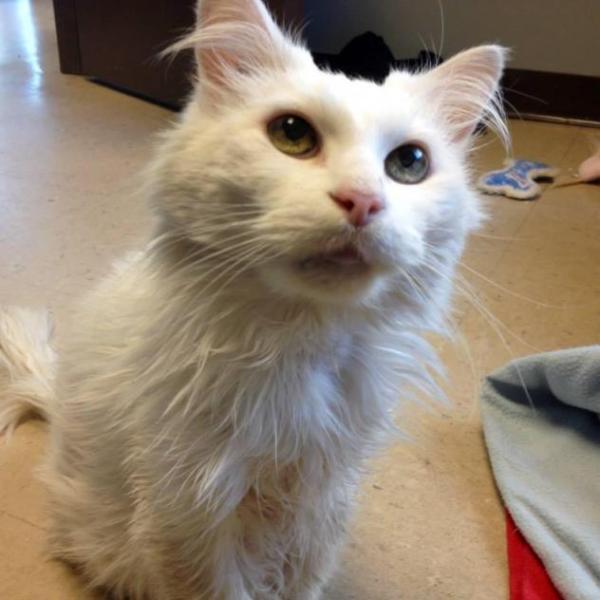 Penelope (New West Animal Shelter).