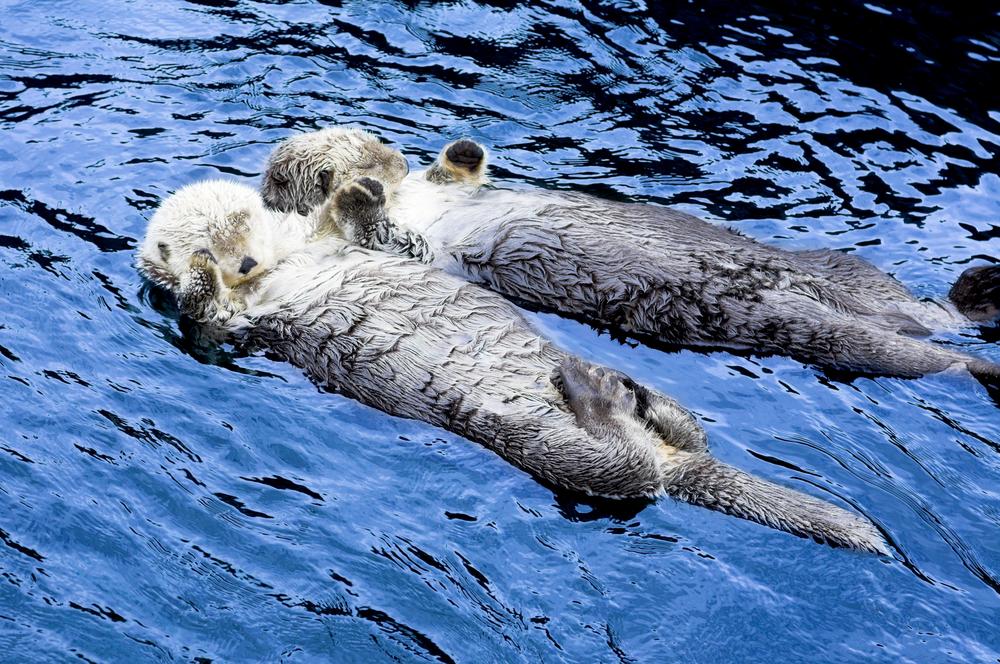 Image: Vancouver Aquarium via Shutterstock