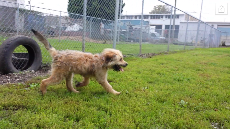 Odyss at the Vancouver animal shelter in Oct. 2014 (Julie Godin)