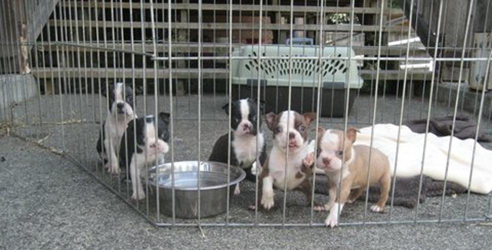 Image: BC SPCA