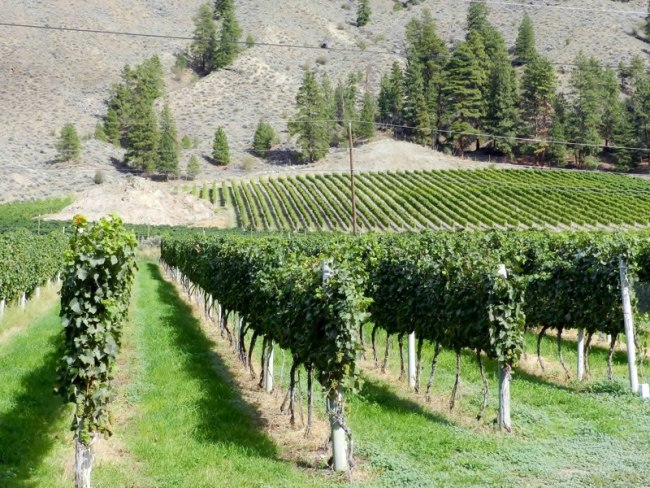 Seven Stones Winery in Similkameen River Valley (Seven Stones)