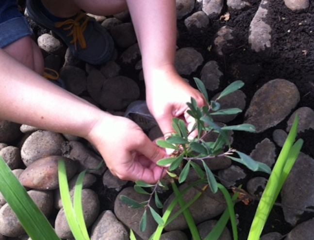 Collecting ingredients in the garden  (Photo courtesy VanDusen Botanical Garden)