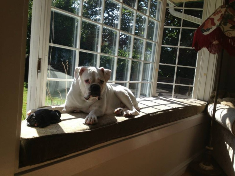 Renny in her favourite window seat.