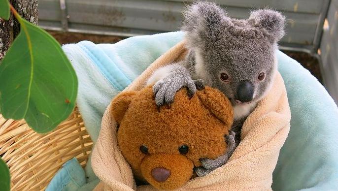 Image: ABC Capricornia/ Jacquie Mackay)
