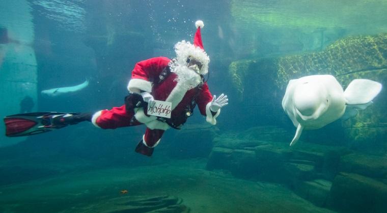 Image credit: Vancouver Aquarium