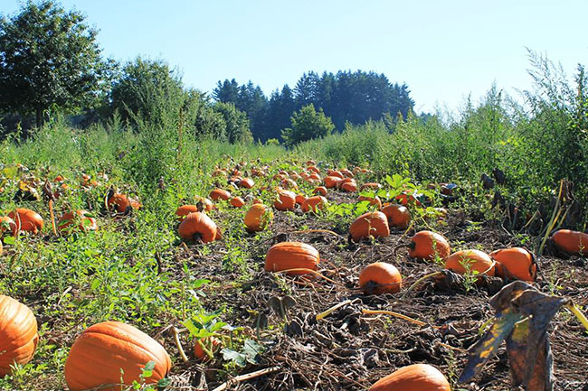 Aldor_Acres_Pumpkin_Patch_Facebook