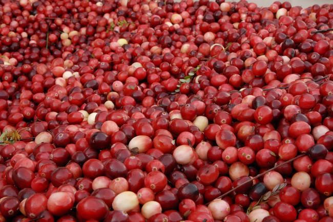 Cranberries (Bruce Foster/Flickr)