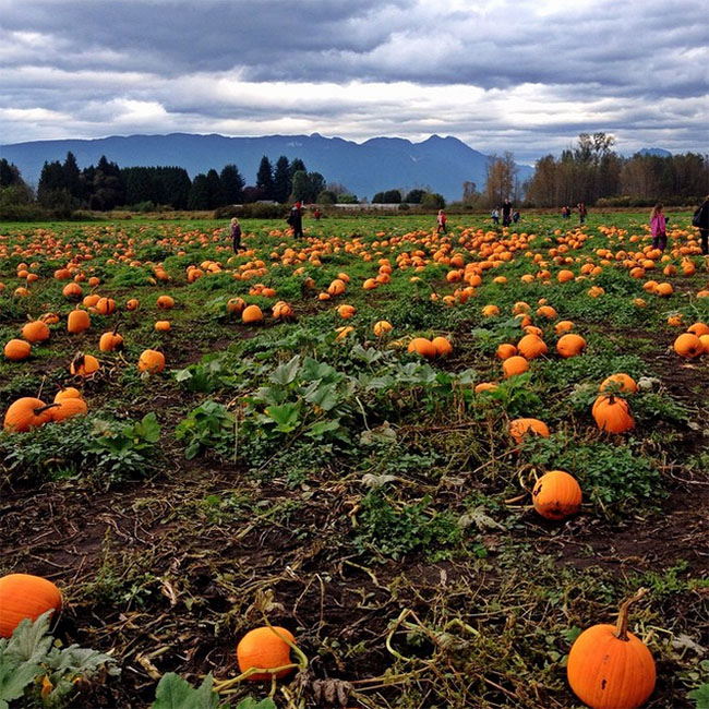 Laity-Pumpkin-Patch-Instagram