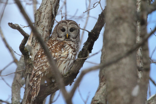 Owl (Jeff Bryant/Flickr)