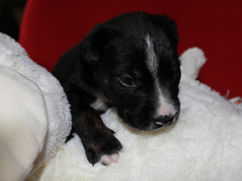 Wee walter, just eight days old (BC SPCA).