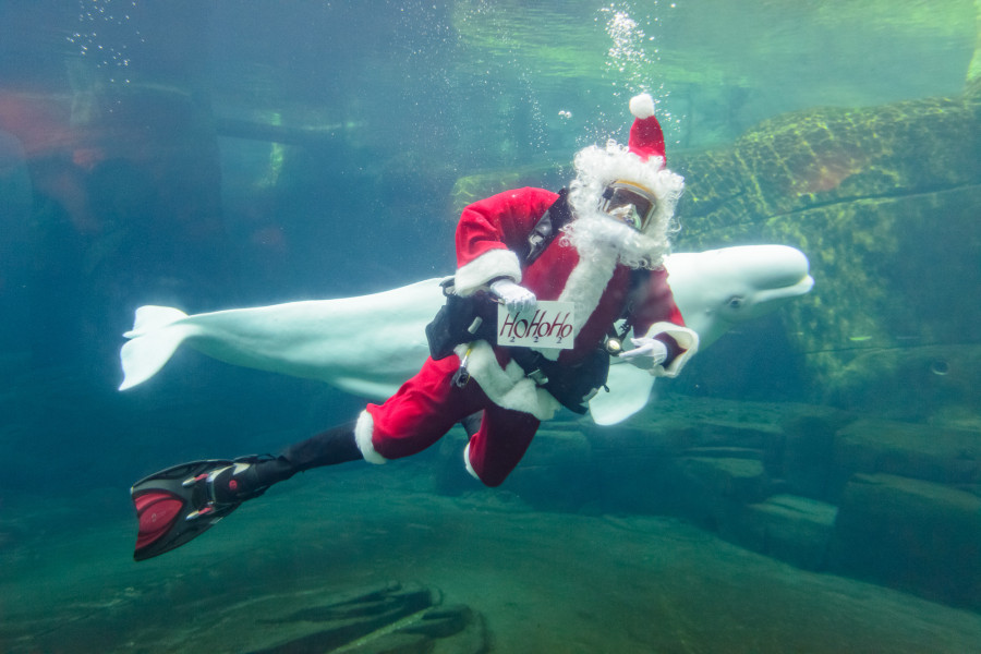 Scuba Claus and Beluga