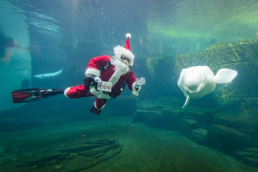 Scuba Claus and Beluga v2
