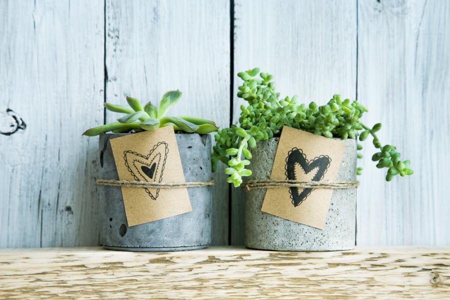 Plants / Shutterstock