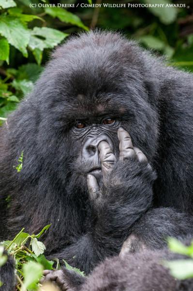 Comedy Wildlife Photography Awards/Oli Dreike
