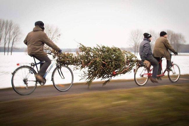 Image: Christmas Tree Burning - Magdeburg, Germany (@baumhelden on Twitter)