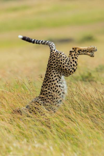 Mohammed Alnaser/Comedy Wildlife Photography Awards