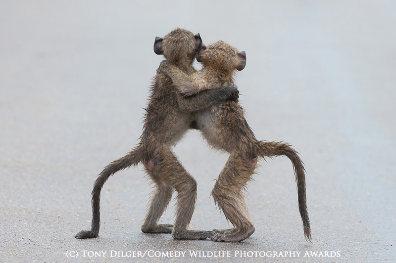 Tony Dilger/Comedy Wildlife Photography Awards