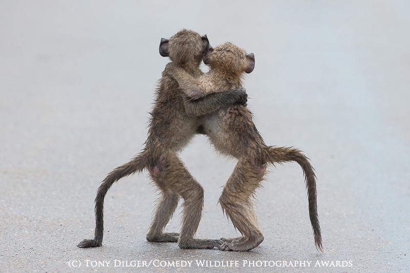 Tony Dilger/Comedy Wildlife Photography Awards