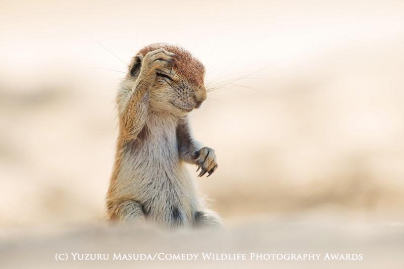 Yuzuru Masuda/Comedy Wildlife Photography Awards