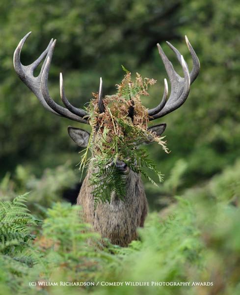 William Richardson/Comedy Wildlife Photography Awards