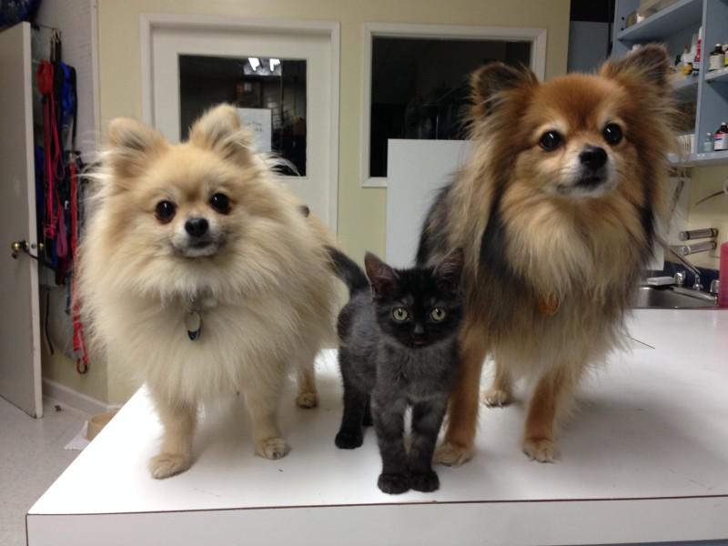 Carlton, Magoo and Henry
