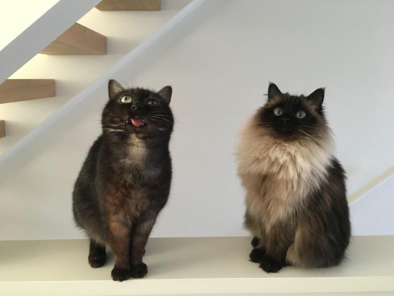 Magoo and Molly