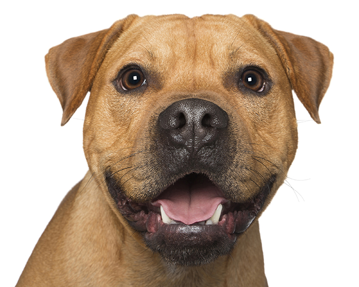 happy-pooch-face-smiling-dogs-make-us-smile-13__700