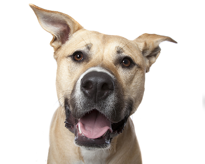 happy-pooch-face-smiling-dogs-make-us-smile-17__700