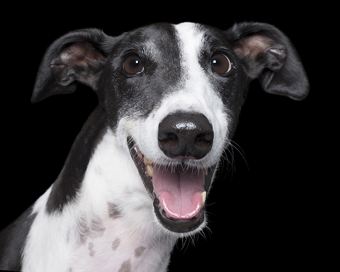 happy-pooch-face-smiling-dogs-make-us-smile-18__700