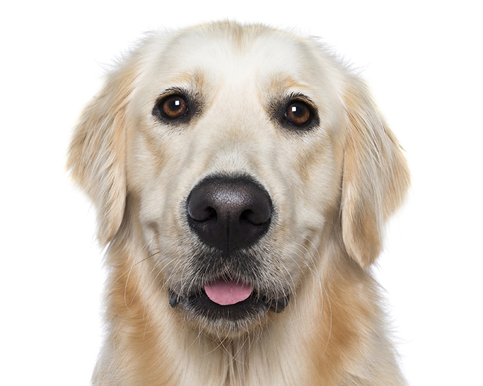 happy-pooch-face-smiling-dogs-make-us-smile-19__700