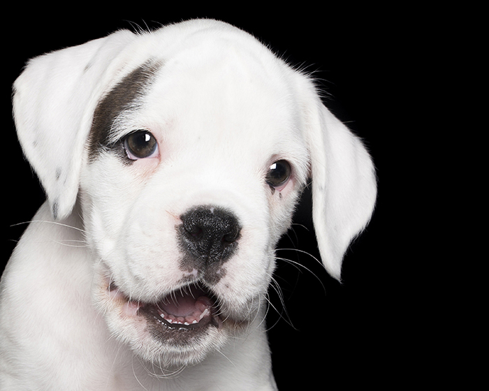 happy-pooch-face-smiling-dogs-make-us-smile-2__700