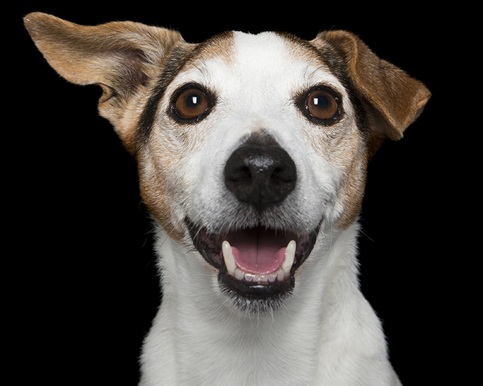 happy-pooch-face-smiling-dogs-make-us-smile-6__700