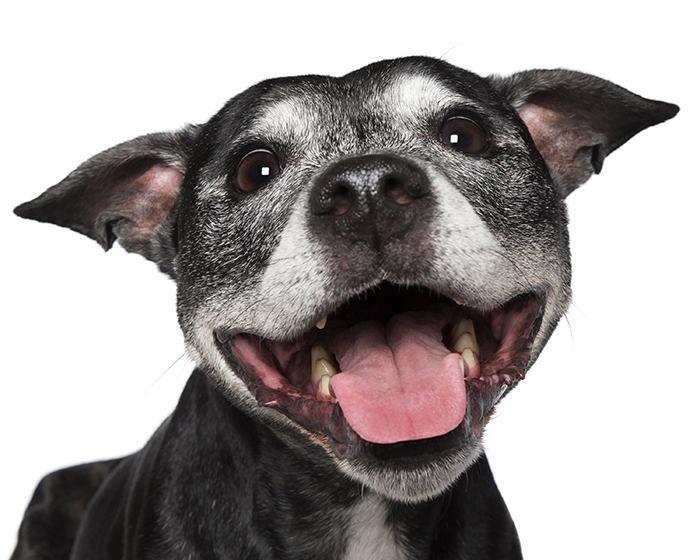 happy-pooch-face-smiling-dogs-make-us-smile-7__700