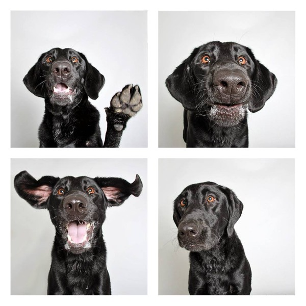 The Humane Society in Utah uses photo booths to showcase less adoptable animals, including black dogs.